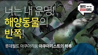 [월드 인싸이드] 롯데월드 아쿠아리움 아쿠아리스트의 모든 것! part 01.