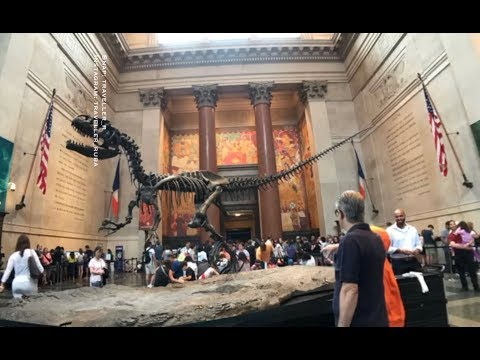 New York (Museum of Natural History - Grand Central Terminal)