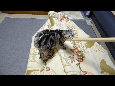猫柄が気になる?新しいラグに一番乗りな猫