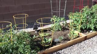 Vegetable Garden By Steve Harpster