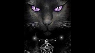 Магия мурчащих ! Мистическая История Кошки.