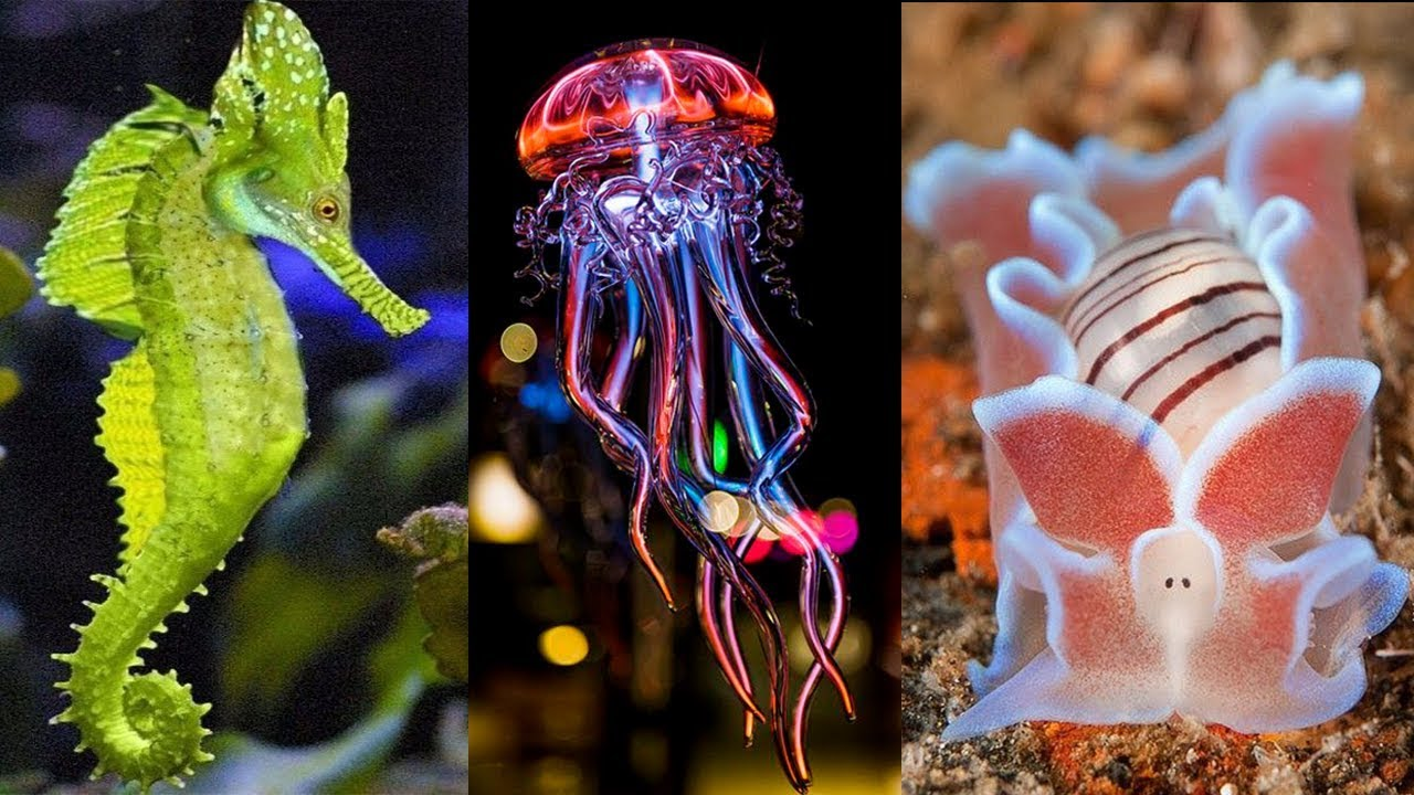 Image result for beautiful sea creatures