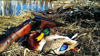 Весенняя охота 2019,с Ночевкой.С подсадной на селезня ,охота на болоте!hunting for a wild duck
