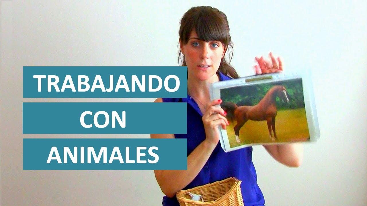 Juegos De Animales Para Ninos Montessori En Casa Youtube