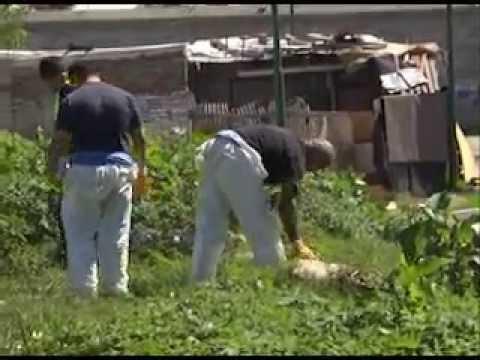 Fumigaci n y desratizaci n en el jard n n 902 de san for Guarderia el jardin san fernando