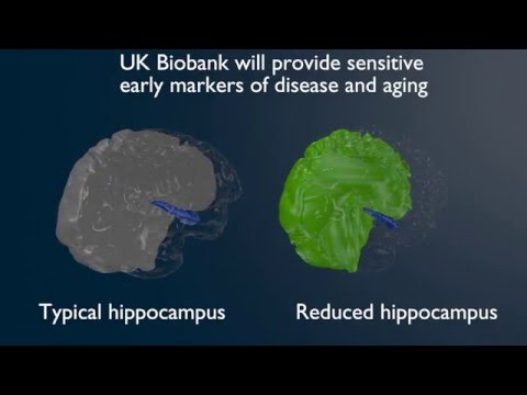 Video of the hippocampus