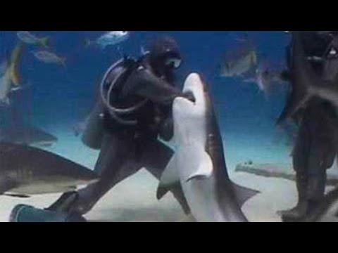 Shark bitten divers head. Shark attack on human / Here and adrenaline