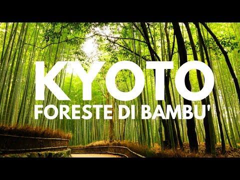 Kyoto *Foresta di Bambù*