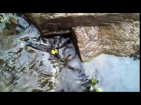 A Small stream at Hongchun