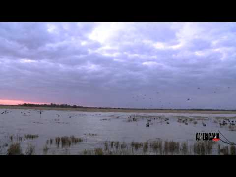 Duck Hunting In Stuttgart, Arkansas