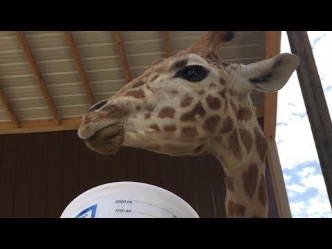 Harmony Park Safari  Huntsville, AL