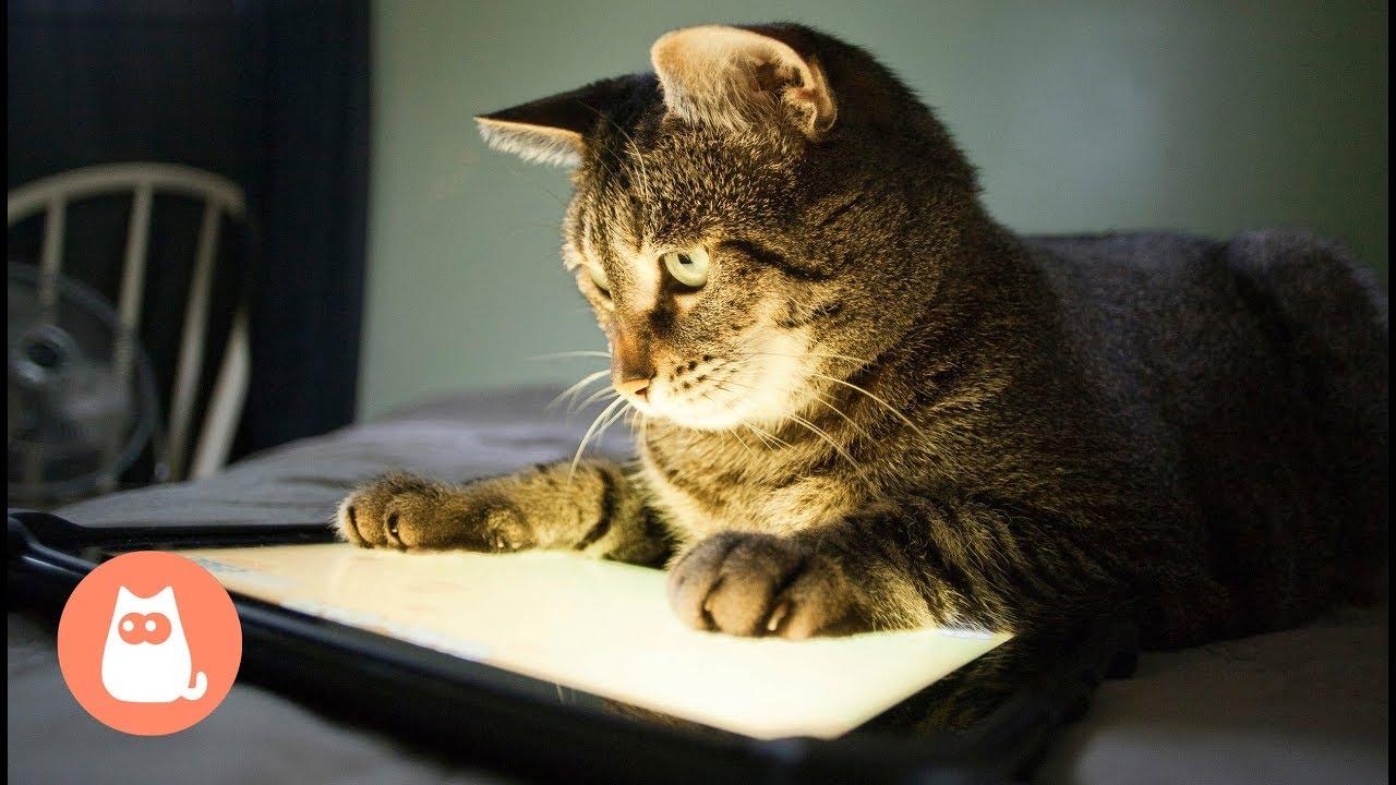 Para Gatos En Ratón Juegos Pantalla MUzGLqVpS