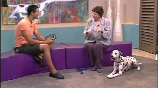 Bobtail- Dalmation Owner Talks About The Breed On Expresso