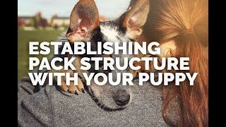 Establishing Pack Structure With Your Puppy (intro)