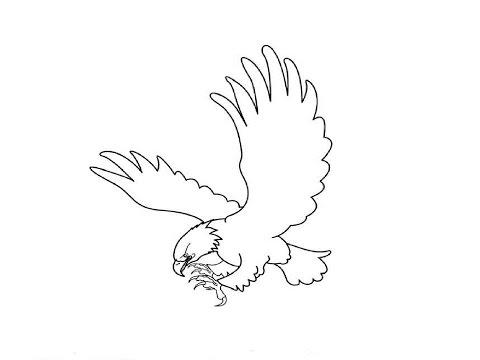 Как нарисовать орла карандашом поэтапно