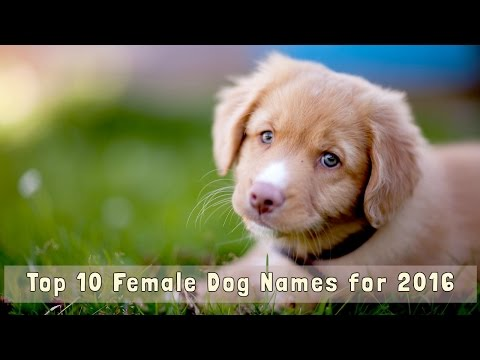 Top 10 Female Dog Names for 2016