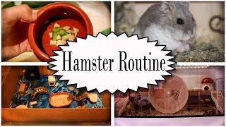 Tägliche Hamster Routine