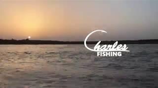 White Bass Fishing | Falcon Lake | Zapata, Texas