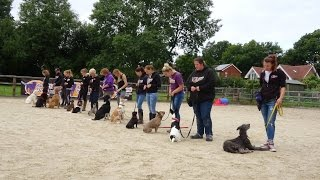Adolescent Dogs Uk - Residential Dog Training 2015 - Collection Service For Uk & Europe