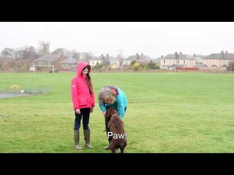 Cù le Gàidhlig | Gaelic-speaking Dog