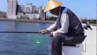 さより釣り道具:さよりちゃん / さより爆釣2013 サヨリちゃん