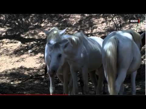 CNN Salt River Wild Horse Uproar