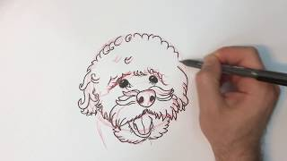 how to draw a dog ( miniature poodle )