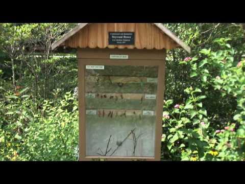 Orlando tourism orlando leu gardens butterfly garden for Butterfly garden orlando