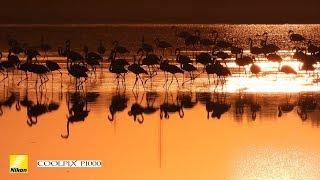 Nikon Coolpix P1000 wildlife and nature footage, Spain. Incredibly versatile camera.