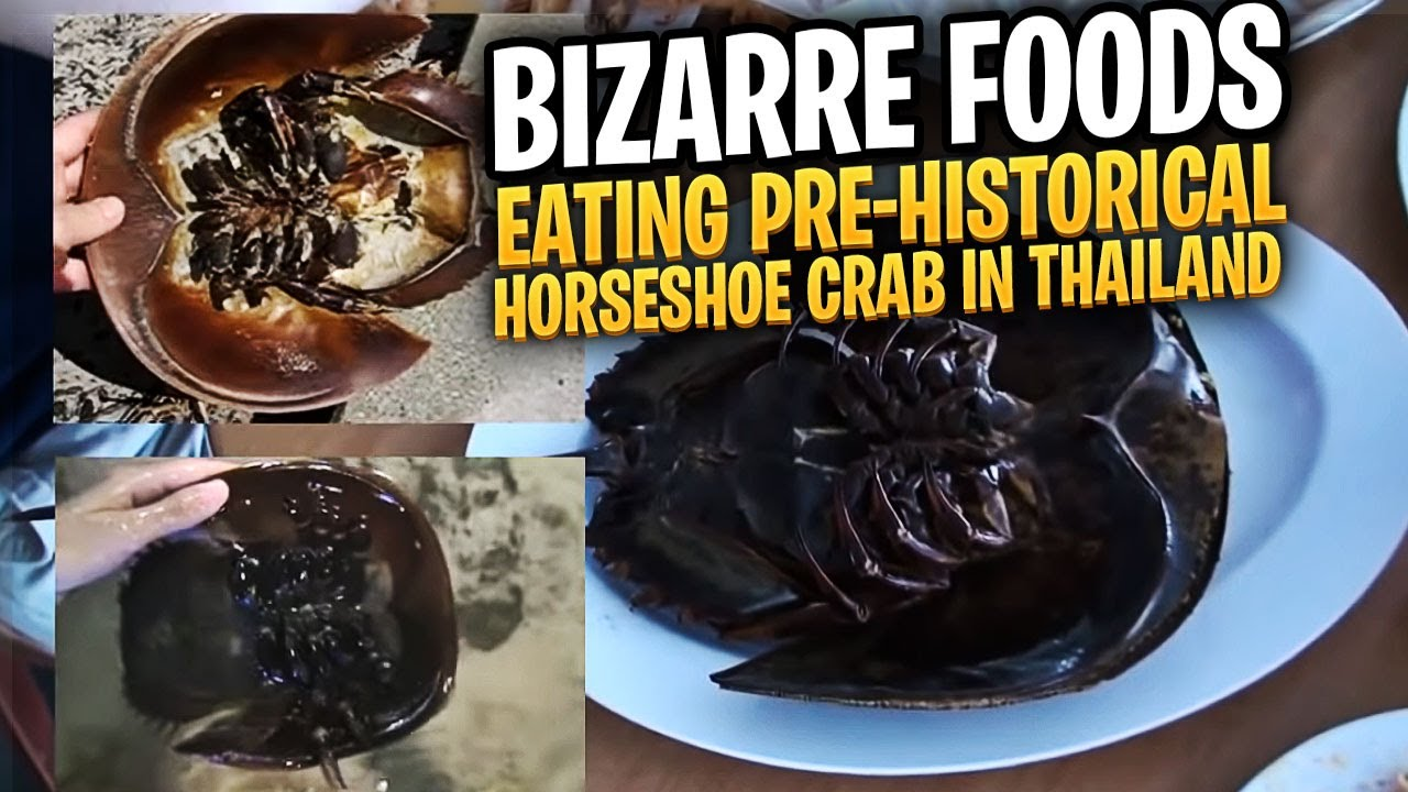 Eating pre historical horseshoe crab in thailand youtube for What can you make out of horseshoes