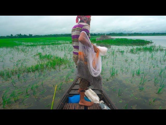 Net Fishing | Catching Fish By Cast Net | Fishing with beautiful nature