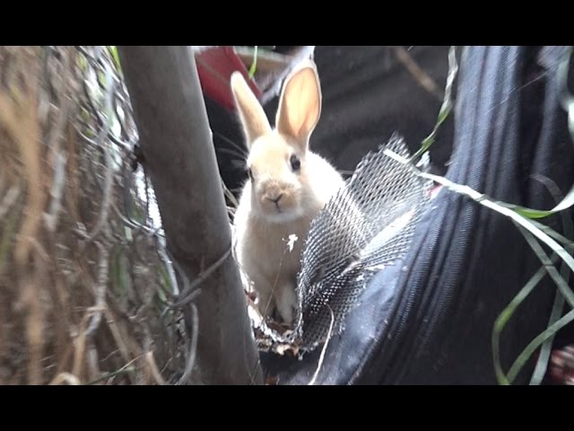 Hope For Paws rescuing a cute little bunny!!  Please share so we can find her a home.