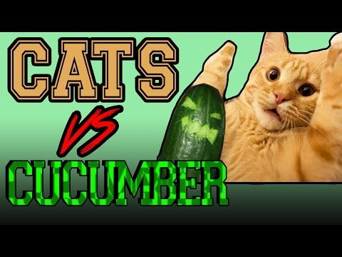 Cats scared of Cucumbers Compilation Cats Vs Cucumbers Funny Cats 2016!!