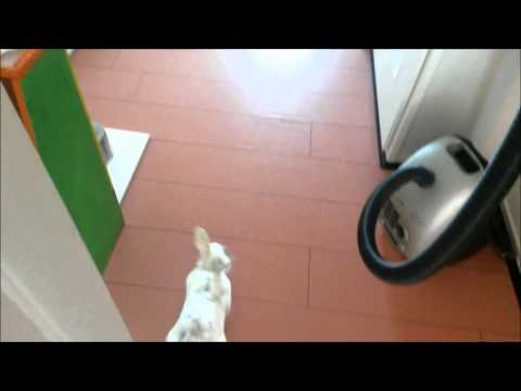 Kiddo het konijn loot voor de Ruilmarkt Oldenzaal