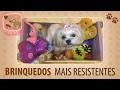 Brinquedos para Cachorros - Dicas Pet | Tips da Penny