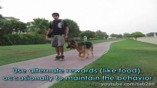 Clicker Dog Training: STOP Leash Pulling!