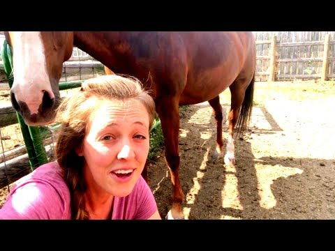 Homemade Fly Spray (FOR HORSES, COWS, Or GOATS!)