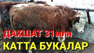 Катта МОЛ БОЗОР НАРХЛАРИ