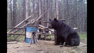 2017 Spring Bear Hunt
