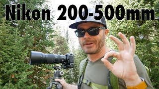 My Experience With the Nikon 200-500mm Lens | Do I Recommend It?