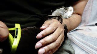 Brushing Aty's body [Otter life Day 293]【カワウソアティとにゃん先輩】