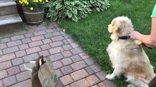 Baby Bunny Thinks Mom Is A Golden Retriever Part 1
