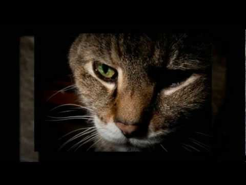 Cat Behavior: Separation Anxiety In Cats