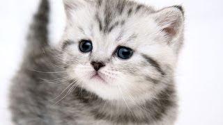 Kitty For Christmas