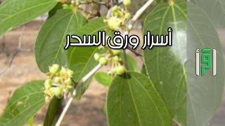 أسرار ورق السدر  - الدكتورة إيمان  محمد حلواني
