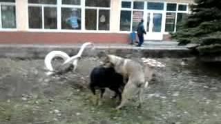 Секс собак - Х