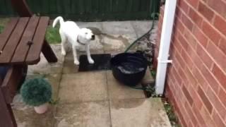 Oldbury dog max