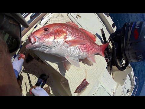 Quad Trigger Fish
