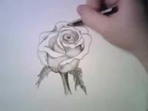 dibujando una rosa - YouTube