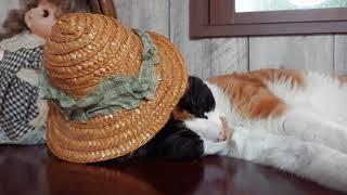 帽子を借りたハナちゃん